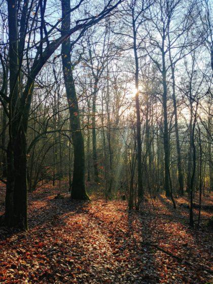 Lichterfüllter Wald, zum allerersten Mal an diesem Tag