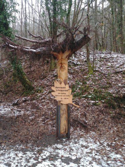 Der rund 100 ha große Bannwald Schnapsried