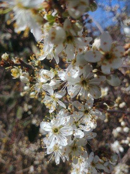 Frühlingsausbruch
