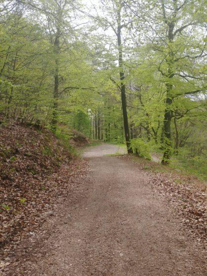 Zurück auf dem breiten Waldweg