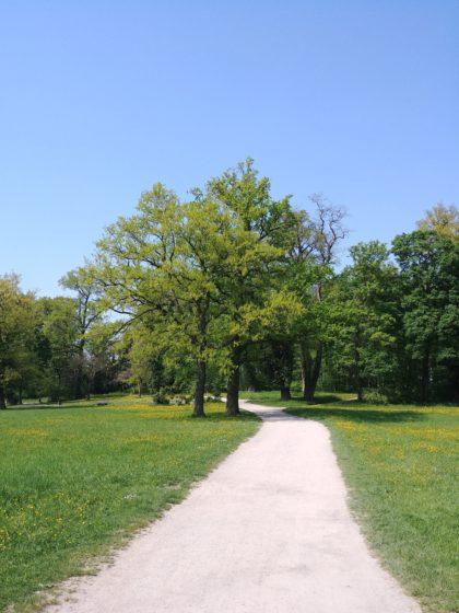 Weg im Aschaffenburger Park Schönbusch/Kantur
