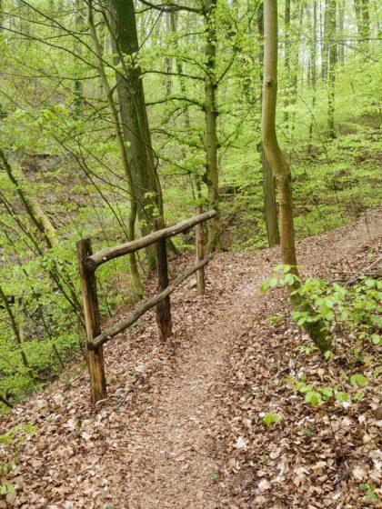 Das dominierende Element des Idesbachpfades ist der Wald
