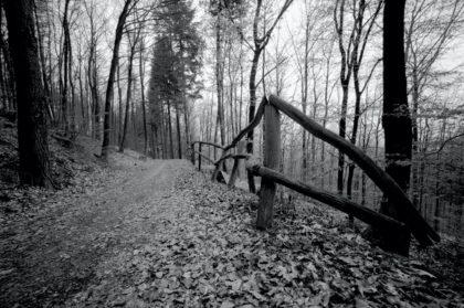 Waldweg oberhalb des Emmertsgrunds (April 2012)/Christine R. Auer