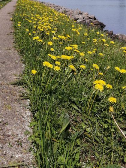 Weg entlang des Nord-Ostsee-Kanals/Küstendeern