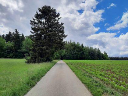 Schwarzwald, Nähe St. Georgen/BlackBox