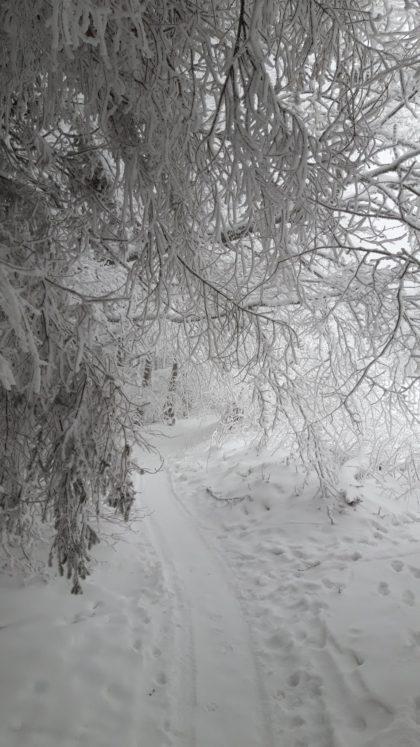 Winterpfad auf dem Hohen Meißner/Karl Waldeck