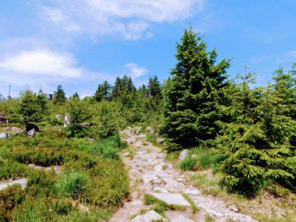 Hornisgrinde, der höchste Berg des Nordschwarzwaldes/Jürgen