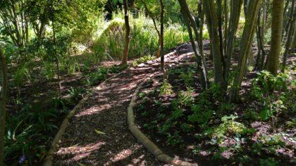 Botanischer Garten Küstenbosch in Kapstadt (2018)/Xanija Nantego