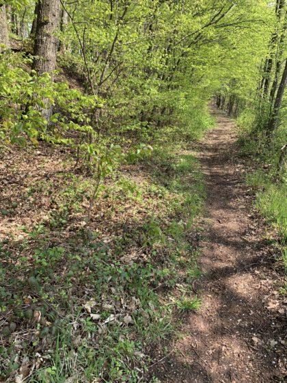 Waldweg zwischen Rinnen und Schwäbisch Hall/Schattengarten-am-Wald