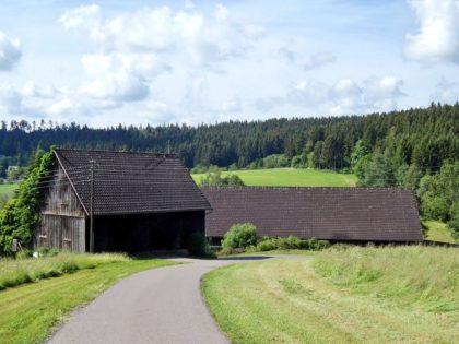 Weg irgendwo im Schwarzwald/BlackBox
