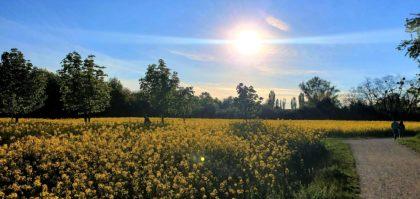 Naturschutzgebiet Wienerberg/Caroline S.