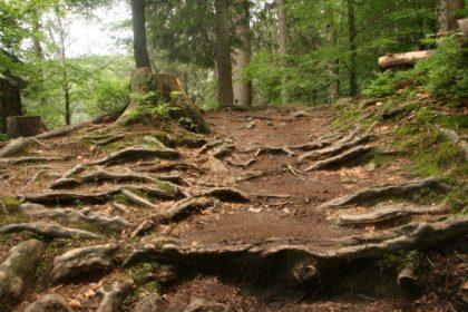 Nationalpark Bayerischer Wald/Küstendeern
