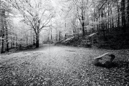 Waldweg oberhalb des Emmertsgrunds (Okt. 2011)/Christine R. Auer