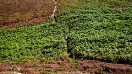 Verwunschener Pfad in der Bretagne (Crozon)/hans-peter schmücker