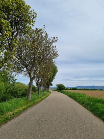 Zwischen Seckenheim und Ladenburg