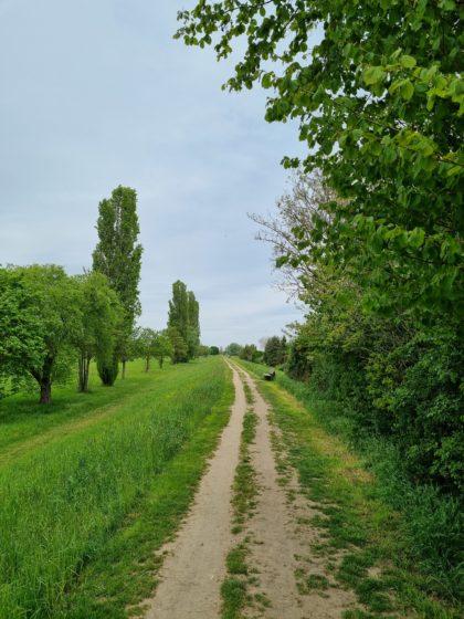 Am Rand von Edingen-Neckarhausen