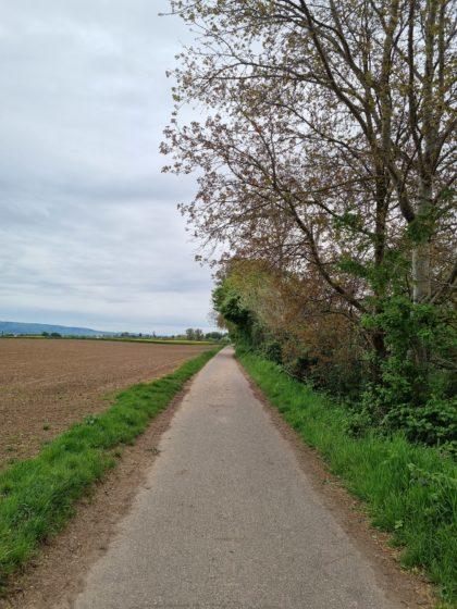Die gesamte Wanderung verläuft über tischebene Wege