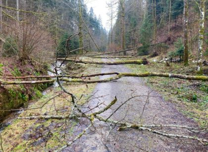 Waldweg im Murgtal bei Baiersbronn/Ma la