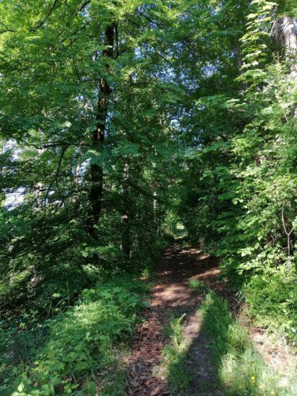 Waldweg im Schwarzwald/Sabine Hammerbacher