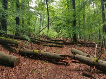 Naturreservat Kreuzbuckel im Spessart/Heiko Hölperl