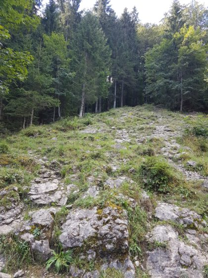 Zwischen Sibratsgfäll und Schönenbach, Vorarlberg/Carmen