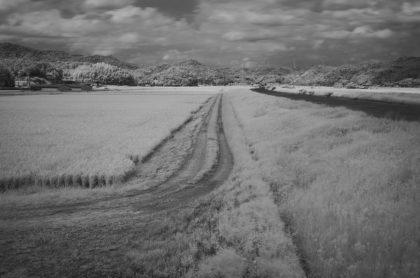 Weg durch die Reisfelder, Matsue (Japan)/Life18