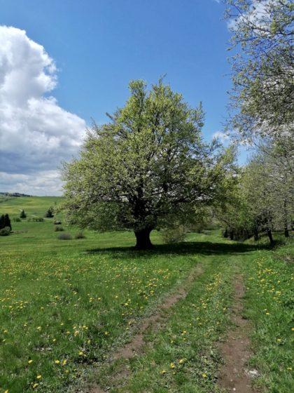 Frühling in der Rhön/Cornelia Bohlen