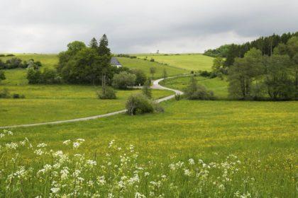 In der Gegend von Nettersheim, Eifel/Elke Glatzer