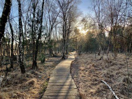Holzbohlenweg im Venner Moor/Bettina