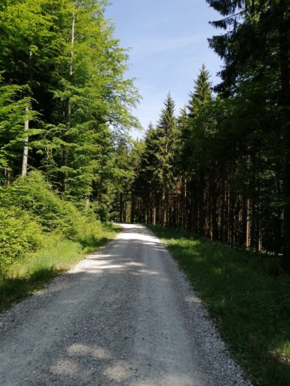 Waldweg zum Kaudachsee, Grünberg, Oberösterreich/Mara F