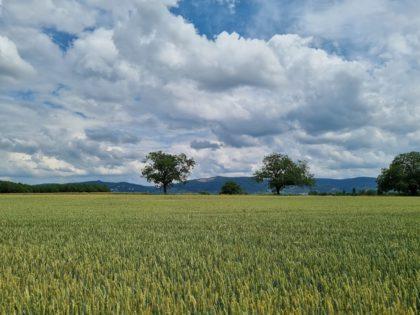 Im Hintergrund die Hügelketten des Odenwaldes