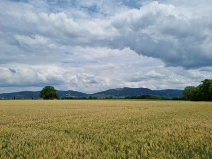Wieder der Blick auf die Odenwaldhügel