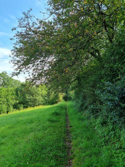 Auch auf dieser Etappe des Lahnwanderweges gibt es so einige Wiesenpfade