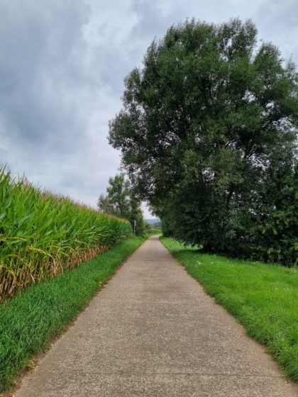 Jede Menge Maisfelder am Wegrand