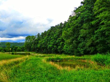 Karpfenweiher im Steigerwald/Foto von Jürgen