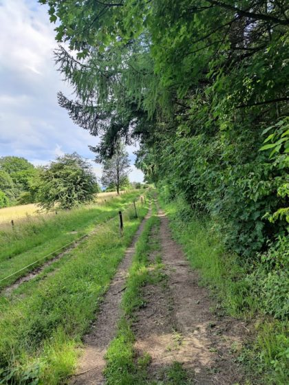 Naturschutzgebiet Wolfertskopf Beckingen, Saarland/Foto von Coltas